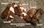 MOCHA AND CHURROS LITTER BORN 8/21/2014
