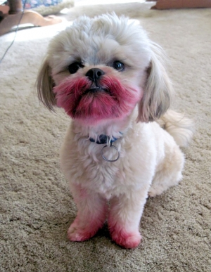 NO! I HAVE NOT SEEN YOUR LIPSTICK!!