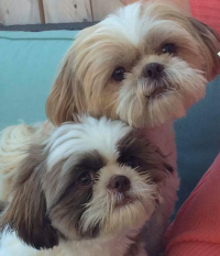 Kiki and Bandit  from Mocha and Churro  Aug 2015 and 2016  Owned by Kim and Joe in  San Diego!!   So handsome!!